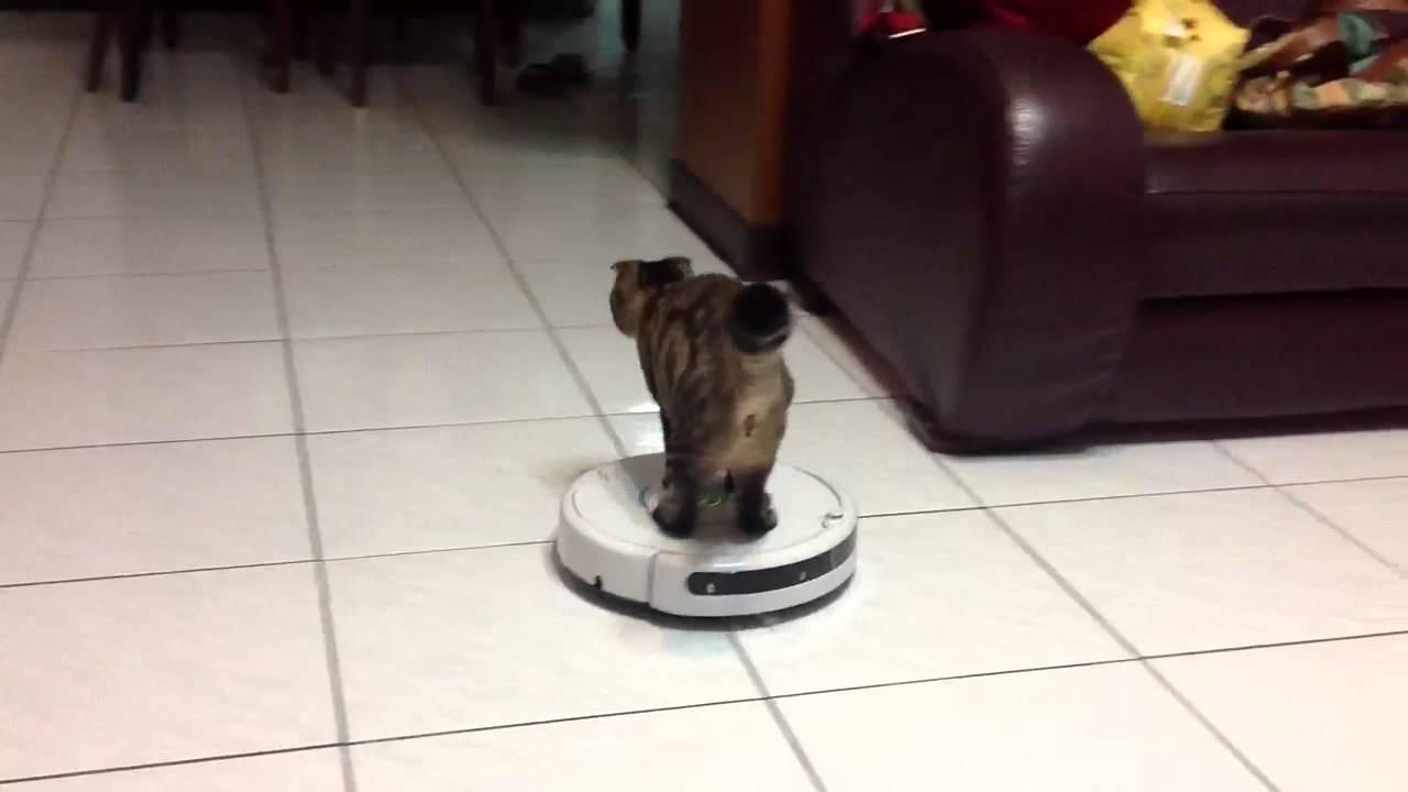 當貓咪遇到I robot (掃地機器人) - YouTube