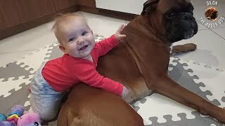 8 months old baby girl cuddling with her boxer dog