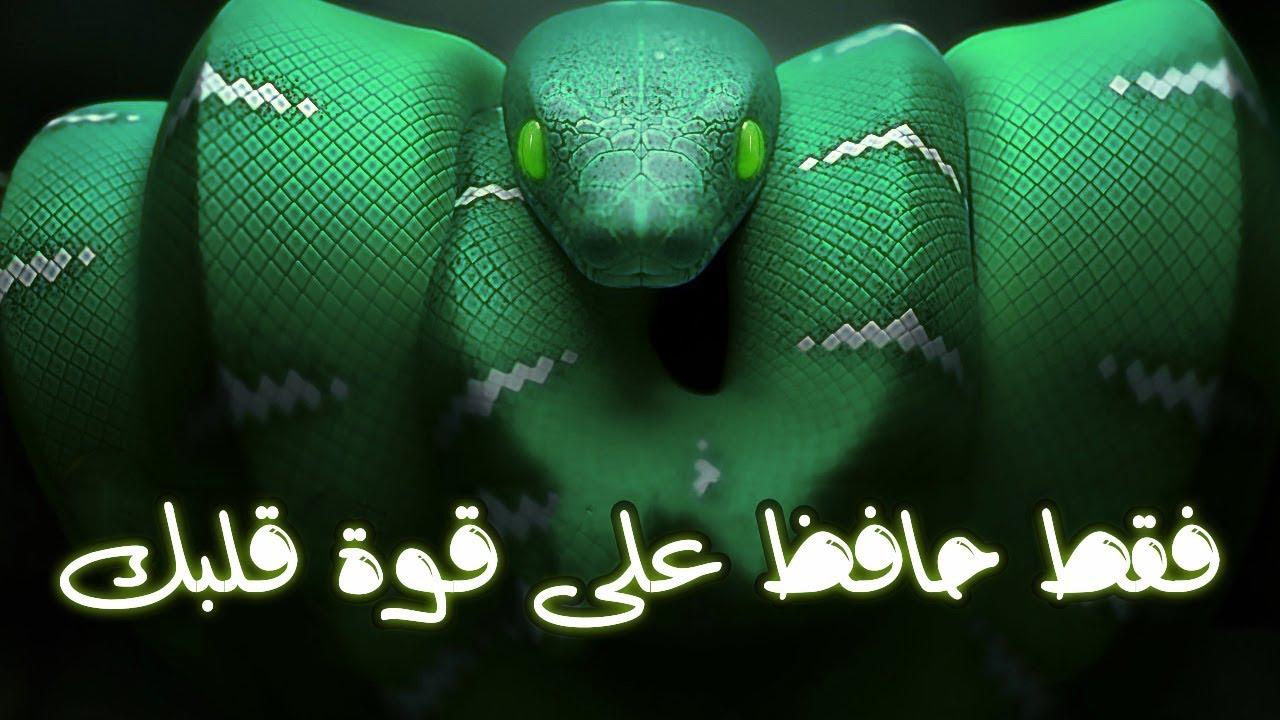 حقائق رهيبة ومخيفة عن الثعابين | لم تسمع عنها في حياتك من قبل!!