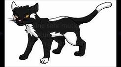Warrior Cats Welche Clankatze bist du ?