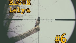 Edgun - Crow and Magpie hunting pest control (slow motion) part 6