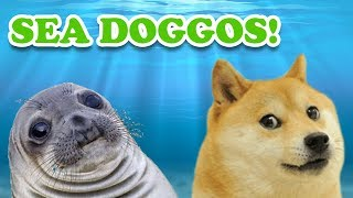Why Sea Lions are Just Like Dogs of the Sea!