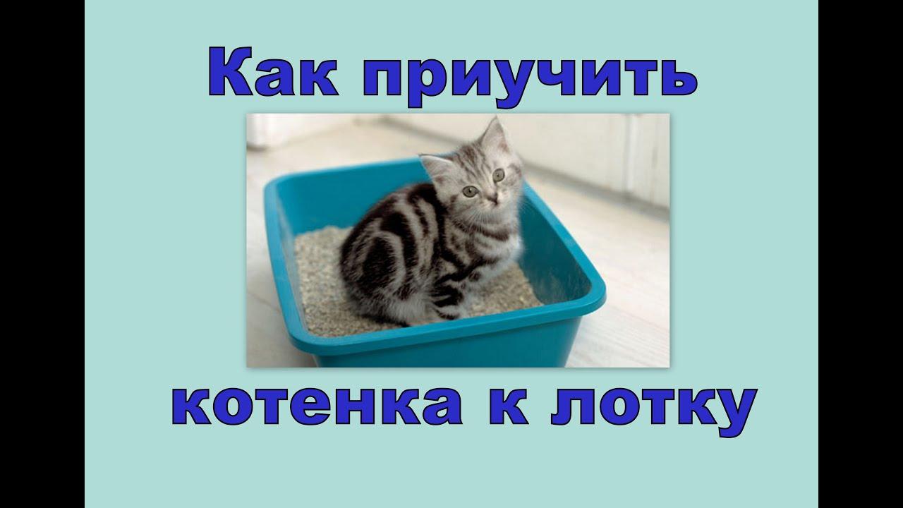 В интернет-магазине иванко доставка вы можете купить средства для приучения кошек к лотку по доступным ценам с доставкой. ☎ 8 (812) 385-06 31.