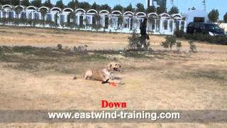 Eastwind Training - Dog Name / Ceaser