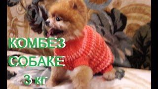 КОМБИНЕЗОН для  СОБАКИ.Как связать комбинезон(свитер)/sweater to the dog/Pullover zum Hund