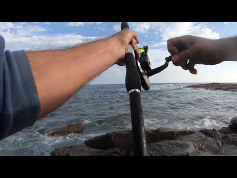 Rock Fishing Victoria | Blue Throat Parrot Fish