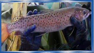 Рыбалка сетями поздняя осень, один день на реке, 2 часть.