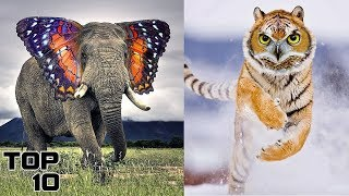 Top 10 Animals - Top 10 Animals Created By Science