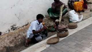 Sri Lankan Snake Charmer - Video 2