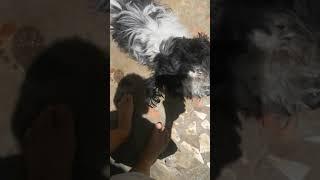 Conhecendo a casa da minha vó longe da minha casa olho o cachorro chamado goku