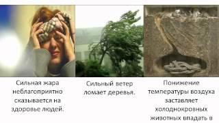 """Видеоурок по биологии """"Экологические факторы среды""""."""