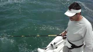 Repeat youtube video TWO Giant Bull Sharks ATTACK. Extreme Tarpon Fishing, Boca Grande, FL May 15 2010
