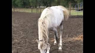 Терские лошади на Ставрополье