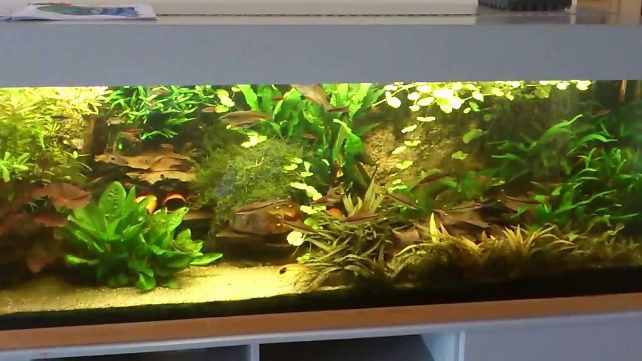 my 700 liters aquarium youtube. Black Bedroom Furniture Sets. Home Design Ideas