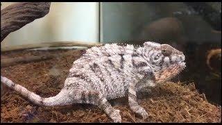 LIOW VIDEO: Jackson at ExoReptiles Malaysia 爬虫专卖店之游