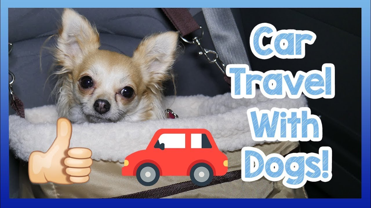 Travelling in a Car with a Dog! How to Safely and Easily Travel with a Dog  in a Car!