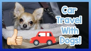 Travelling in a Car with a Dog! How to Safely and Easily Travel with a Dog in a Car! thumbnail