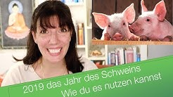 Jahr des Schweins 2019