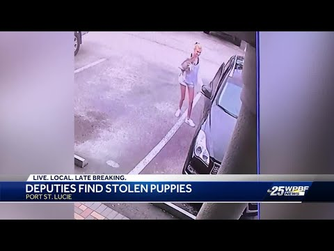 "Stolen puppies recovered, ""appear to be in good shape"" - YouTube"