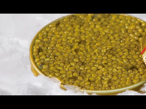 Markys - Karat Caviar: Farm process and quality (Caviar Osetra and Caviar Kits)
