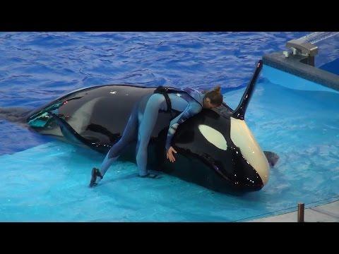 One Ocean All New Shamu Show SeaWorld Orlando Fl