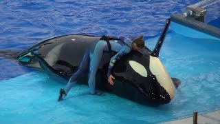 One Ocean All New Shamu Show SeaWorld Orlando Fl 2014/2015