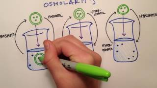 LPA 1B - Osmolarity vs  Tonicity