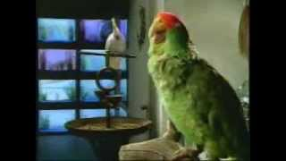 Budweiser commercial: Wazzup Parrots