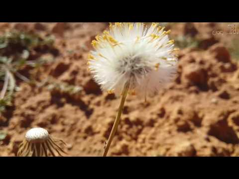 بالفديو ربيع تطاوين  | Tataouine | 2017