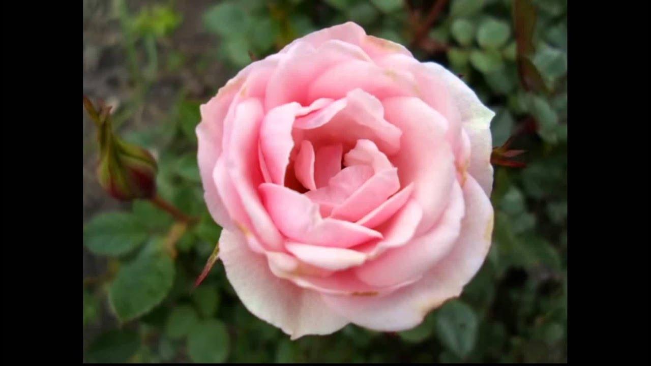 flores del jard n bot nico de bogot youtube