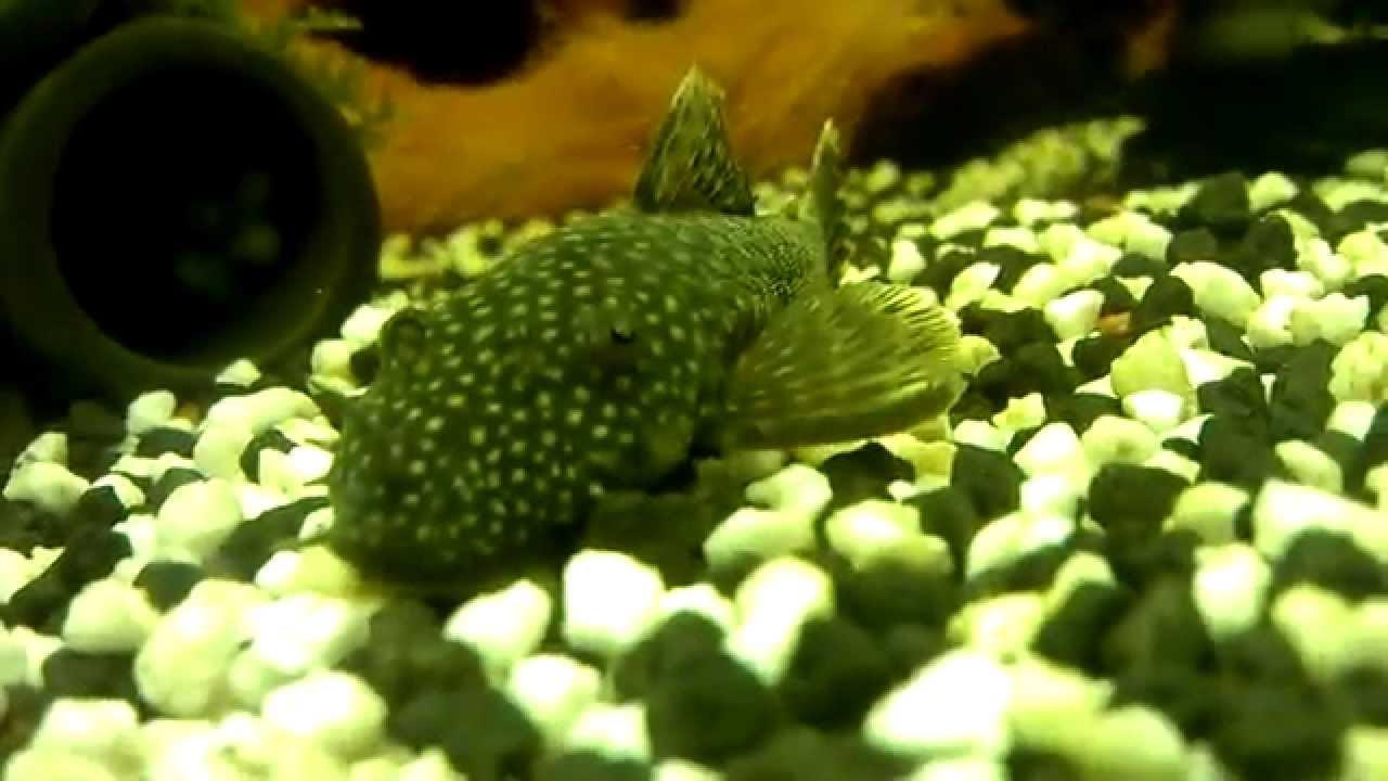 Wels Aquarium