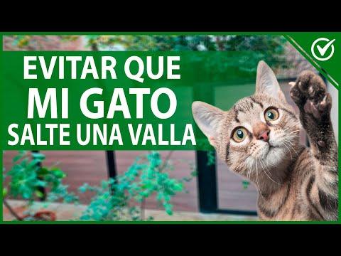 Cómo Evitar que mi Gato Salte un Cerco o una Valla 🐱 ¿Los Rodillos Anti Escape de Gatos son Buenos?🐱