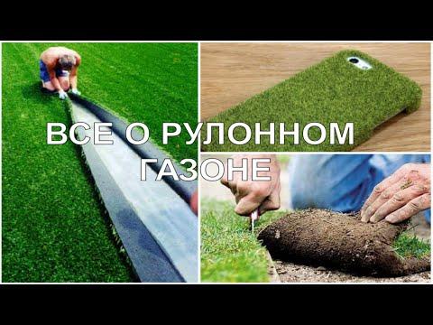 Рулонный газон - производство и выращивание (компания ldgrand.ru)