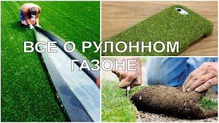 видео Технология выращивания рулонного газона