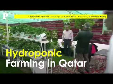 Hydroponic Farming in Qatar