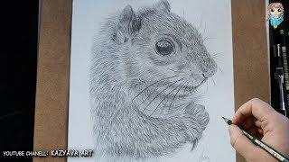 Как нарисовать белку карандашом поэтапно✦