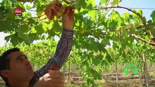برنامج المغرب الأخضر في زيارة ضيعيتين بسيدي سلميان