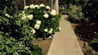 видео Форма для заливки садовых дорожек своими руками : бетонирование
