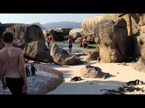 Boulders Beach, Cape Town, South Africa - hanging out with Penguins.