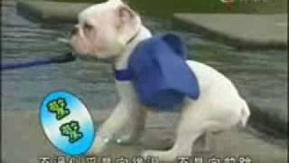 Juegos Japoneses El Perro Y El Mono