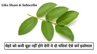 ये 2 पत्तियाँ आपको कभी भी बूढ़ा और मोटा नही होने देंगी // Guava Leaves Benefits // Crazy India