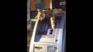 Eine Katze verteidigt Geldautomat – Cat on ATM – voll lustig