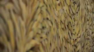 SIGNES ET SABLES - ARLES - JANVIER 2014