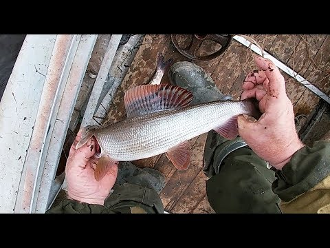 Открытие сезона \ Рыбалка на продольники \ Первая проверка \ Щука рвёт язя