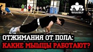 Отжимания от пола. Какие группы мышц работают?(Продолжение видео обзора одного из базовых упражнений в воркауте - отжиманий от пола. На этот раз темой..., 2014-11-15T21:24:32.000Z)