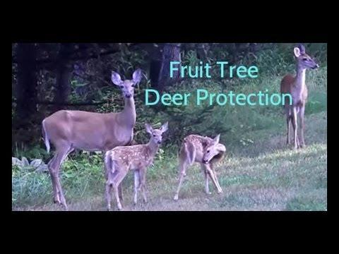 Fruit Tree Deer Protection