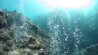 奄美の加計呂麻島でのダイビング.