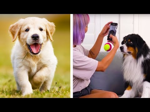 Be Paw-sitive! Cute Pet Hacks and More DIY Crafts by Blossom