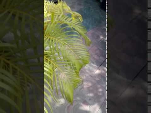 53 o Beautiful trees