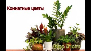 Редкие Комнатные растения с названиями Vlog